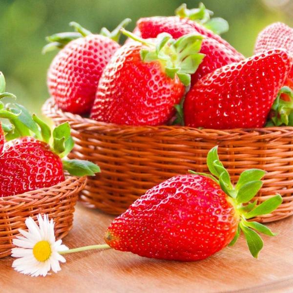 توت فرنگی گلخانه ای در وزن های مختلف